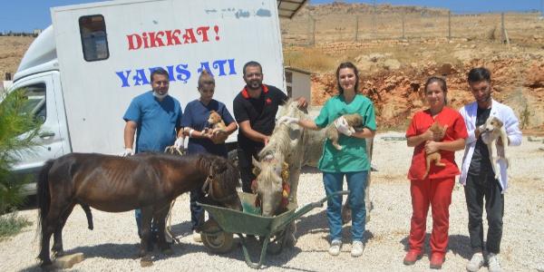 Mardin'de işkence gören at tedavi için İstanbul'a gönderildi