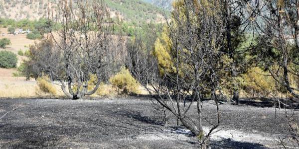 Sivas Koyulhisar'da 7 hektar kızıl çam ormanı yandı