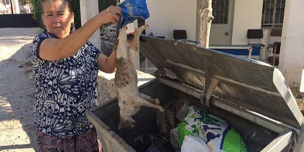Milas'ta ölü bulunan kediler mahalleyi ayağa kaldırdı