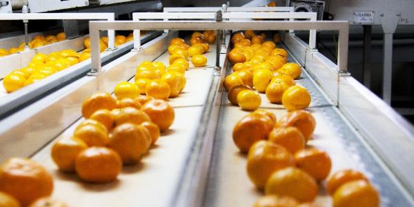 Yaş sebze ve meyve ihracatçılarından 4 ülkeye birden tanıtım atağı