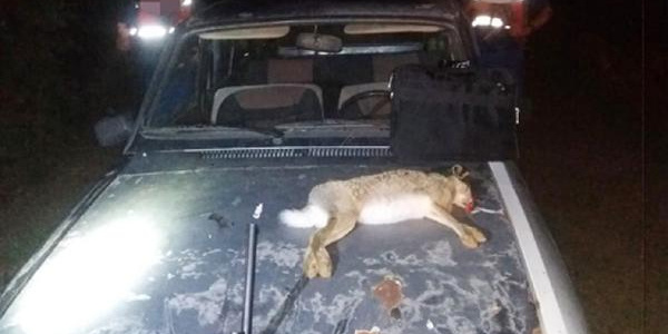 Burdur'da 'Far avı' yapan kaçak avcılara tavşan yüzünden 3 bin 551 lira ceza