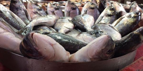 Denize açılan balıkçıların en büyük sıkıntısı dolar