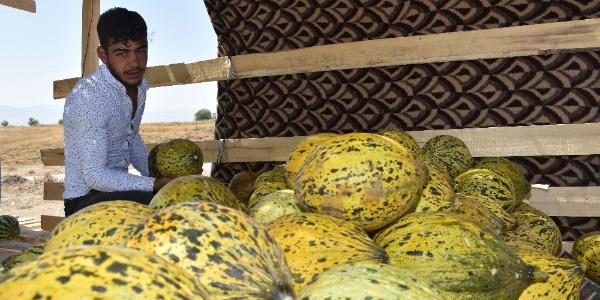 Muş'ta kavun- karpuz satıcılarının pazar sıkıntısı