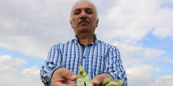 Emekli mali müşavir 8 kilo tohum ile 2 ton fasulye topladı