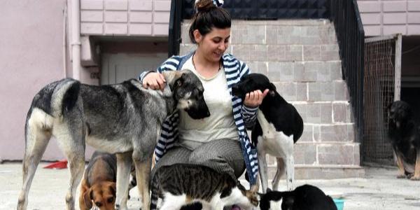 Sahipsiz kalan 100 kedi köpeğe ölen kadının kızı sahip çıktı