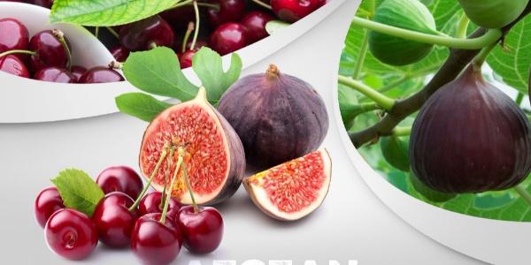 Ege Yaş Sebze ve Meyve İhracatçıları Aydın incirini uzakdoğuya götürdü