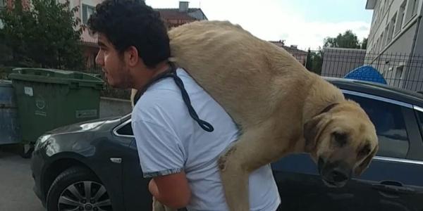 Hasta köpeği tedavi ettirmek için veterinere sırtında götürdü