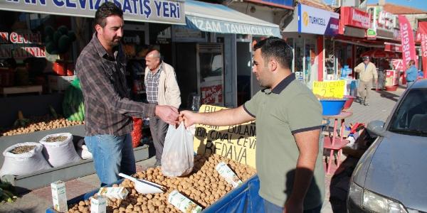 Cevizin anavatını Kırşehir Kaman'da  hasat zamanı
