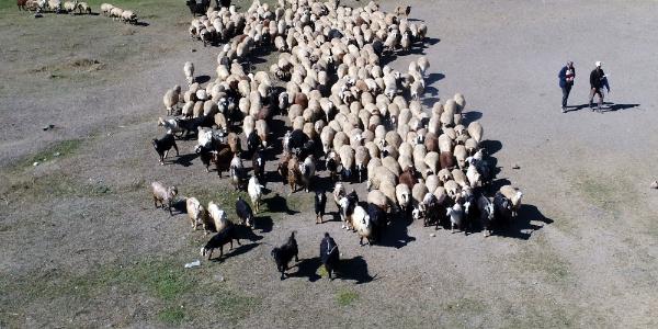 Kars'ta göçerlerin yaylalardan dönüşü başladı