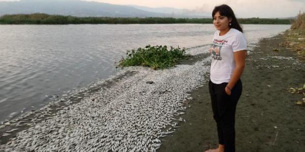 Asi Nehri'ndeki balık ölümlerinin nedeni belli oldu: Oksijen yetersizliği