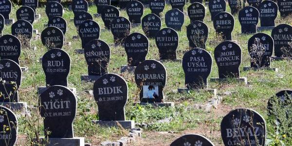 Samsun Büyükşehir Belediyesi'nden evcil hayvanlara özel mezar