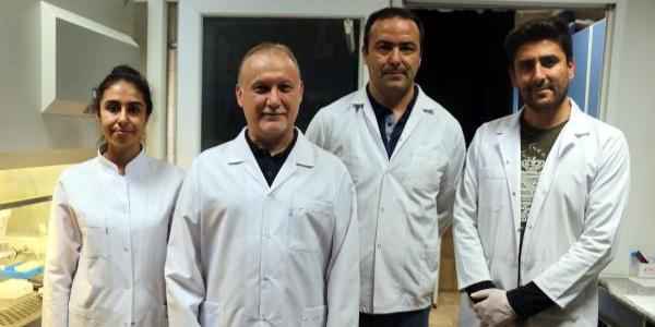 """Celal Bayar Üniversitesi'nden sıtmaya karşı """"bitkili tedavide"""" önemli adım"""