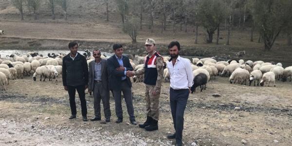Van'da çobanı bağlayarak 135 hayvanı çalan hırsızlara şok operayon