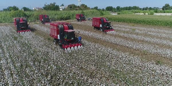 Antalya'da pamuk üreticisinin merakla beklediği fiyat açıklandı: 3.80 TL