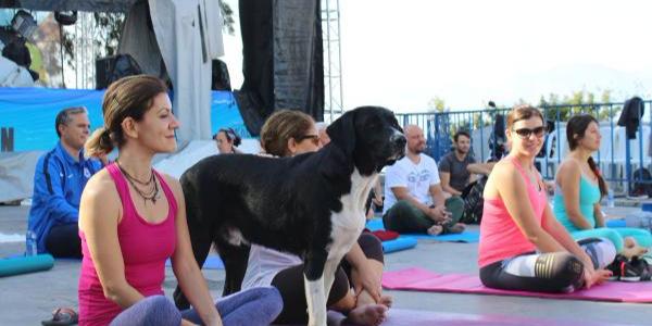 Antalya Muratpaşa'da sokak köpekleri ile birlikte yoga yaptılar