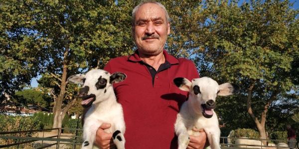 İzmir Büyükşehir 152 aileye 606 koyun ve keçi dağıttı