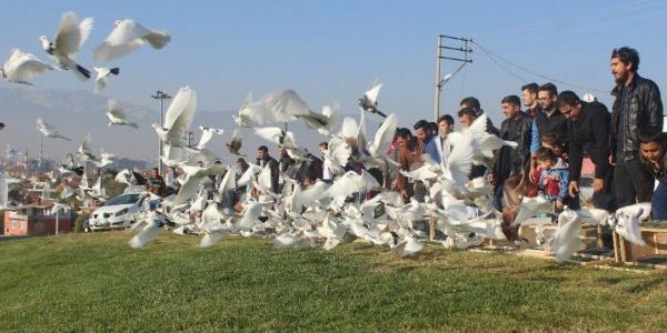 500 güvercin 'dostluk' için uçtu