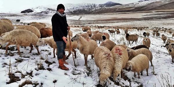 Erzincan'da koyun sürüleri yaylada mahsur kaldı