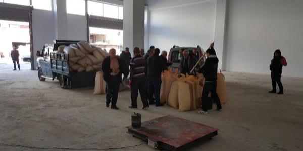 TOPRAK Mahsulleri Ofisi (TMO)  fındık alımına başladı