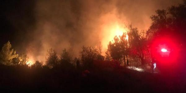 Anamur'da korkutan yangın: narenciye bahçeleri ve ormanlık alan zarar gördü