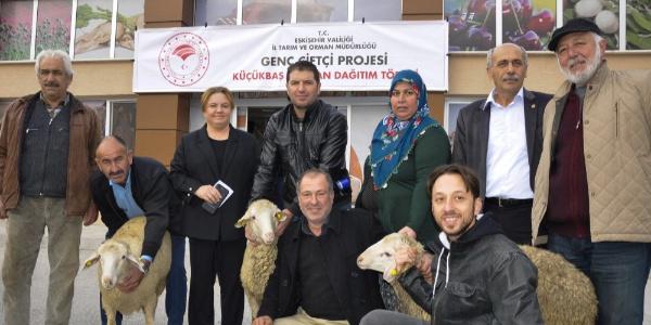 Genç çiftçilere 224 adet koyun hibe desteği