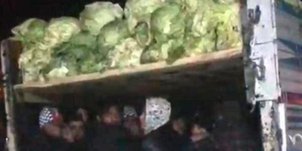 Lahana yüklü kamyonda 38 kaçak göçmen yakalandı