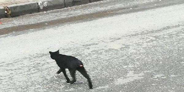 Sultangazi'de kuyruğu kesilmiş kediler mahalle halkını tedirgin etti
