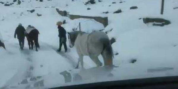 Yaylada terk edilen iki at donmak üzereyken kurtarıldı
