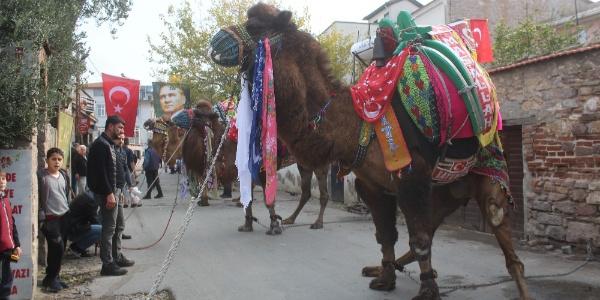 Pehlivan develer için havut hayrı