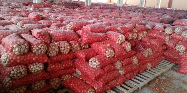 Ankara'da stoklanmış 1300 ton kuru soğan çıktı