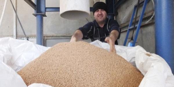 Fosil yakıtlara  alternatif zeytin çekirdeği Yunanistan'a ihraç ediliyor