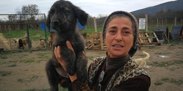 İstanbul'daki evini bıraktı, İznik'te hasta hayvanlar için barınak kurdu