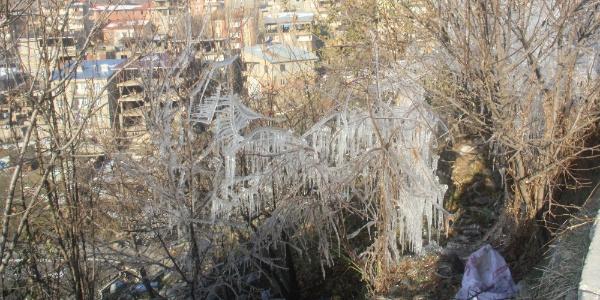Hakkari'de aşırı soğuklar nedeniyle ağaçlar buz tuttu