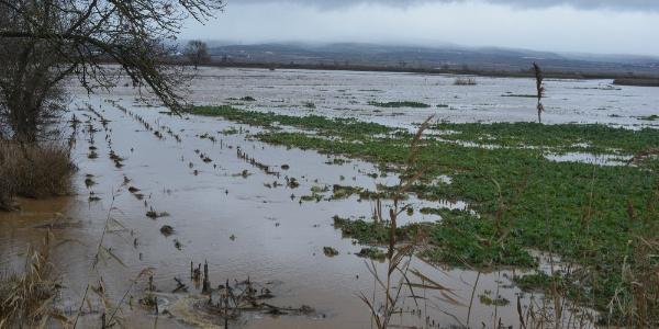 Karacabey'de şiddetli yağmur nedeniyle tarım arazileri sular altında