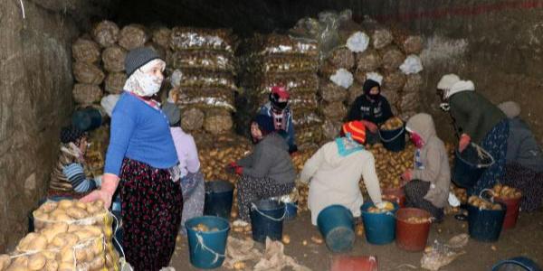 Afyonkarahisar'da patatesler, doğal soğuk hava deposu mağaralarda saklanıyor