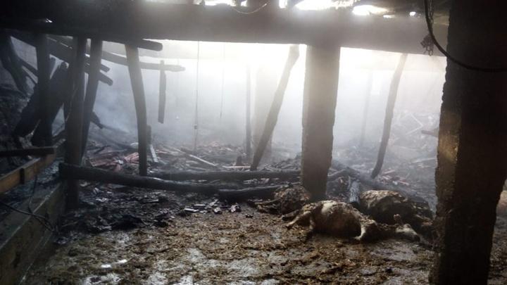 Tokat'ta ahırda yangın çıktı, 48 küçükbaş hayvan telef oldu