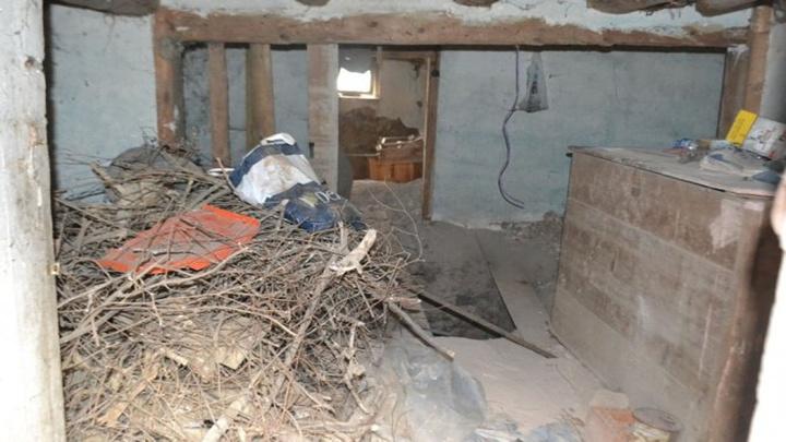 Bolu'da bir kedi sayesinde, define kuyusu ortaya çıktı