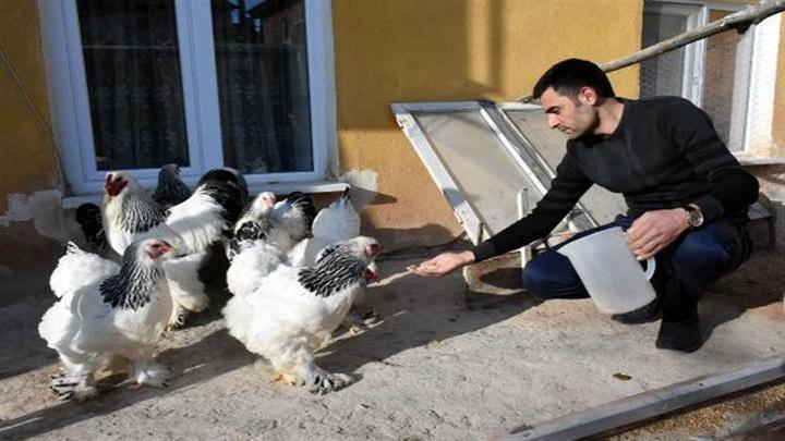 Sivas'ta özel güvenlik görevlisi 2014 yılından beri süs tavuğu besliyor
