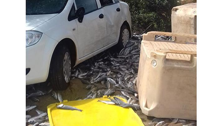 Didim'de balık kamyonu virajı alamadı ve devrildi