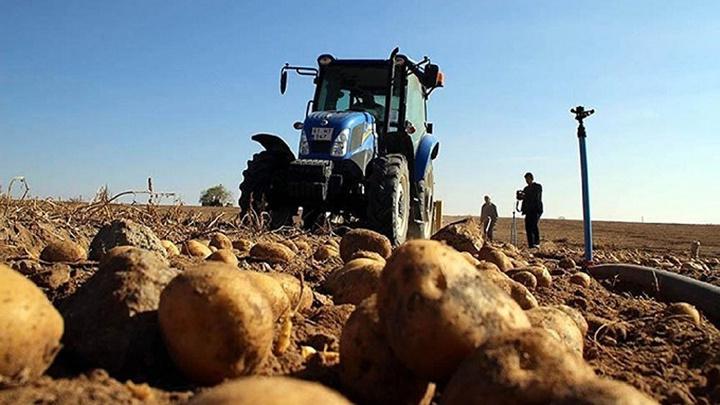 Patates ithalatı, çiftçiyi küstürebilir