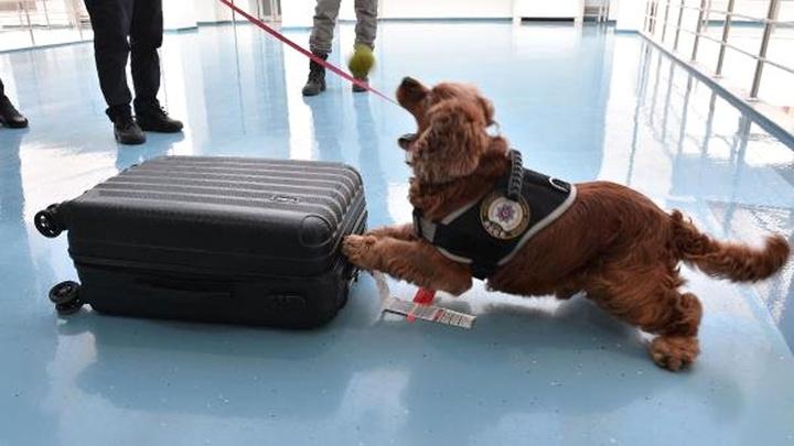 Adana'da havalimanında uyuşturucuyla yakalanan 'Business Class' yolcuları: Kebap yemeye geldik
