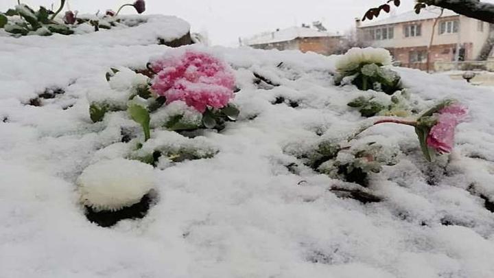 Denizli'de açan çiçekler kar altında kaldı