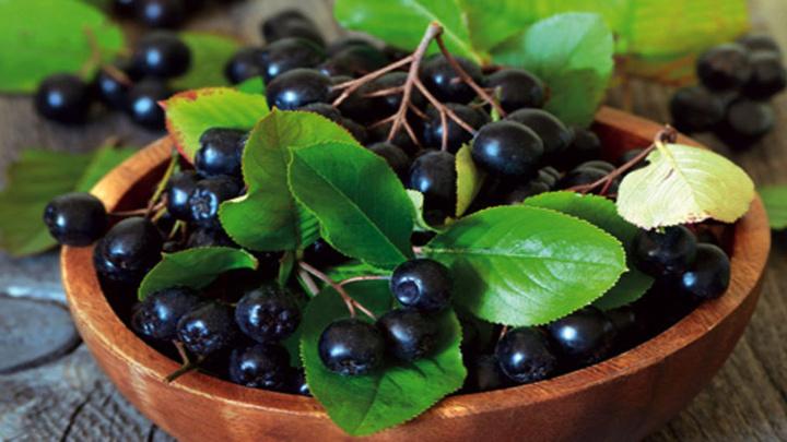 Mucize bitki 'Aronia meyvesi' kansere ve zayıflamaya karşı etkili