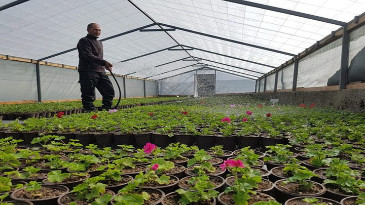 Dünya parlamentoları arasında en büyük yeşil alana sahip olan TBMM, kendi çiçeğini üretiyor