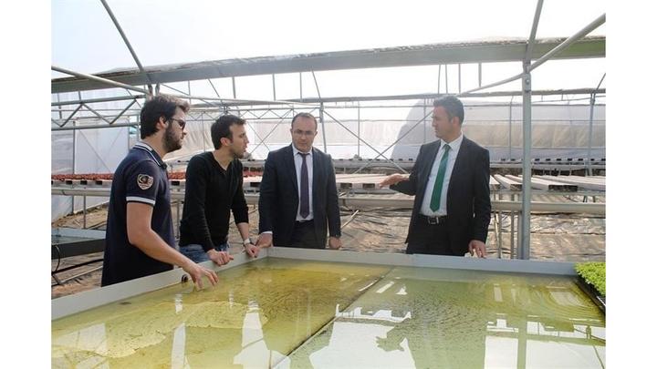 İnşaat mühendisi 4 arkadaş Bilecik'te topraksız tarıma başladı