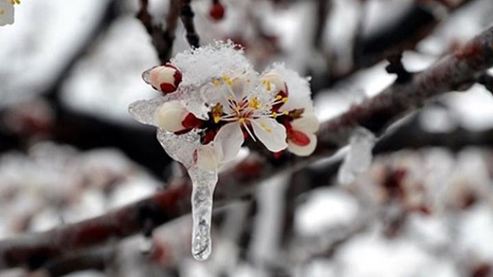 Meteoroloji'den Bursalı çiftçilere don uyarısı