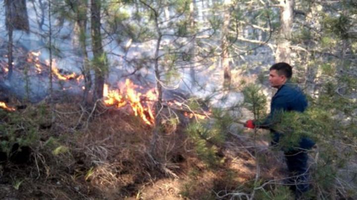 Mudurnu'da ormanlık alanda çıkan yangında 4 hektar otluk alan kül oldu