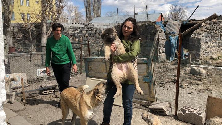 Kars'ta engelli sokak hayvanlarının bakımı ve barınması için ev açtı