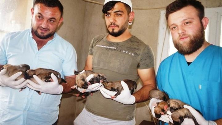 Manisa Sarıgöl'de bir köpek 18 yavru doğurdu