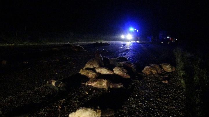 Gercüş'te araçlar koyun sürüsüne daldığı kazada; 50 koyun telef oldu, 5 kişi yaralandı